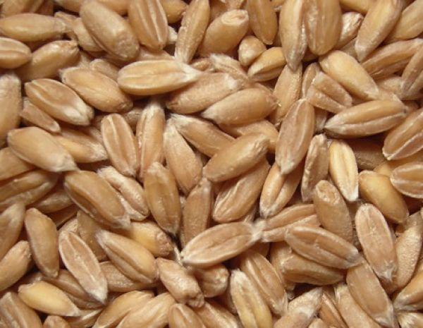Lebenbauer Dinkel ganzes Korn (Steiermark) 1 kg